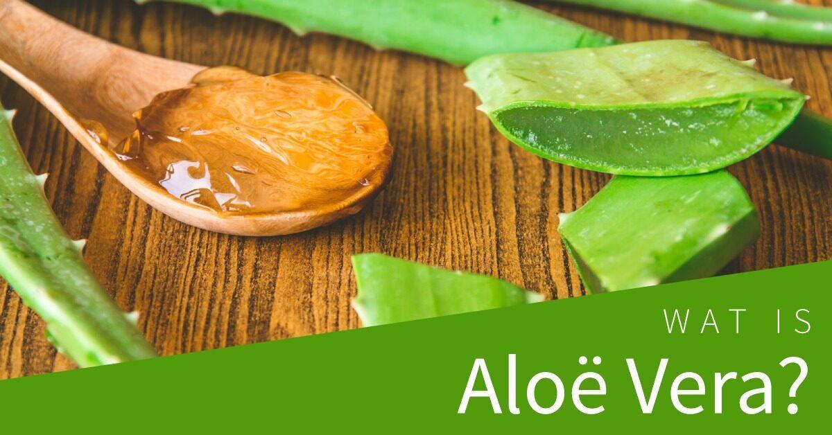 Wat is Aloe Vera